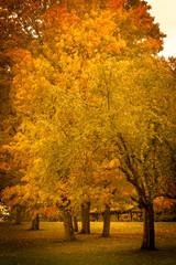 Garden Poster Fall Colors