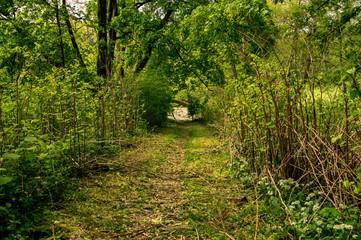 Landscape scene of a path