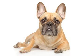 Tuinposter Franse bulldog Young French Bulldog graceful lying