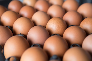Eggs in a plastic panel