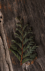 old branch on a wooden background