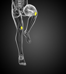 3d render medical 3d illustration of the patella bone