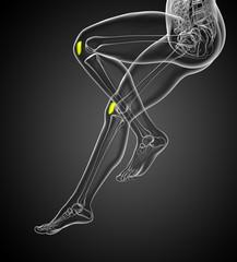 3d render medical 3d illustration of the patella bone