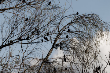 Birds silhouettes in the midst of plants and trees