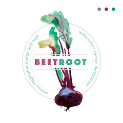 Watercolor vector beetroot badge, banner with beetroot. Beetroot vector watercolor sign with leaves, banner with ripe beetroot, fresh beet isolated, image beet, food ingredients, beet vector badge.