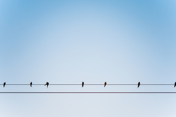 Relaxing Bird on electric wire with clear sky and near sunset.