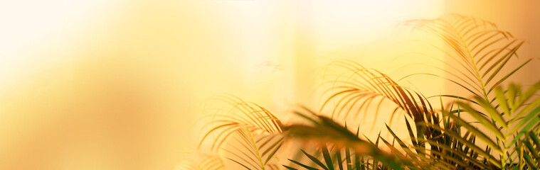 Shadows of tropical palm leaves on pastel yellow wall background. Summer banner with copy space