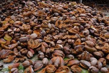 Coconut husks discarded after opening