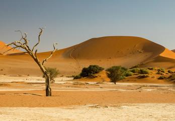 Sonnenaufgang im Sossusvlei in Namibia
