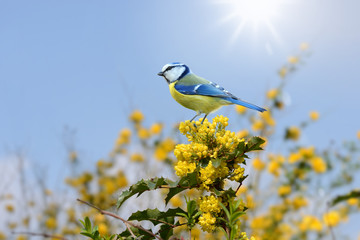 Vögel 96