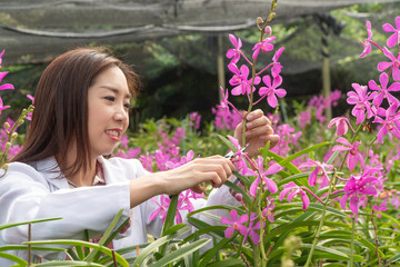 Researcher botanical research orchid wearing a white cap and cutting Orchid flower to research in the orchid garden Wall mural