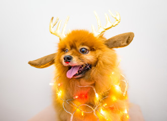 funny dog with christmas decoration lights