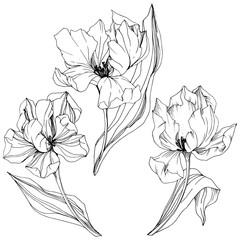 Vector Tulip Black and white engraved ink art. Floral botanical flower. Isolated tulip illustration element.