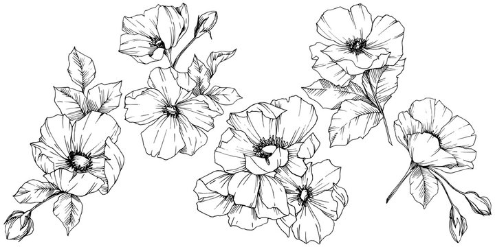 Vector Rosa canina flower. Black and white engraved ink art. Isolated rosa canina illustration element.