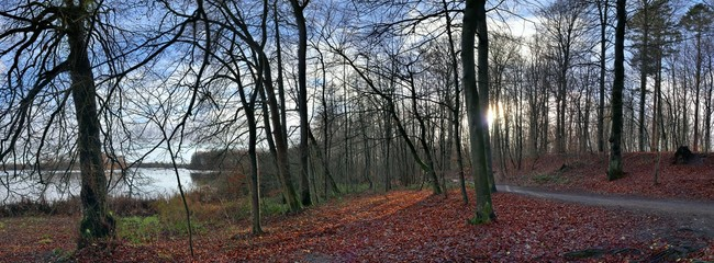 Panorama of a northern germany forest at a lake