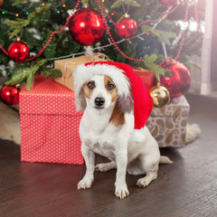 Dog near christmas tree