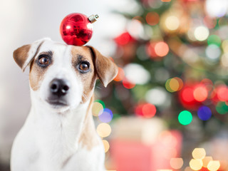 Dog near christmas tree