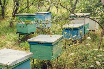 Beehives in the garden
