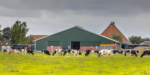 Dairy farm barn on dutch countryside Wall mural
