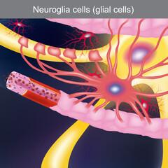 Neuroglia cells
