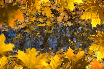 Reflex of trees on the water surface.Autumn Frame.