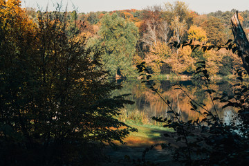 Sunshine on lake in peaceful autumn forest