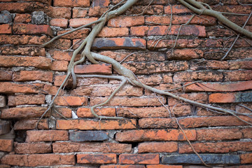 The walls of the walls are old orange brick. Root old wall archi