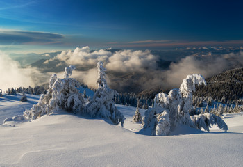 Snowy trees in winter mountains, Carpathians, Ukraine