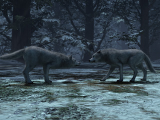 3d rendering of couple wolves winter in the wild, wolves male and female walking together