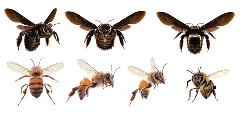 various bees on white background