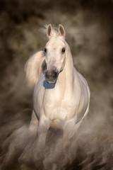 Wall Mural - Grey horse run gallop in desert sand