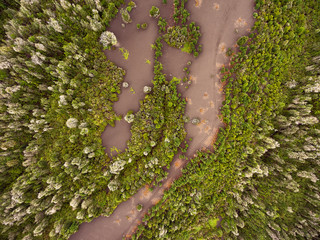Green vegetation of volcano from drone