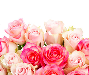 Rose fresh flowers bouquet in two shades of pink border isolated over white background