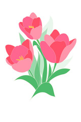 Tulips bouquet. Spring pink flowers on white background. Vector abstract drawing.