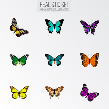 Set of moth realistic symbols with tailed-blue, butterfly, striped purple crow and other icons for your web mobile app logo design.