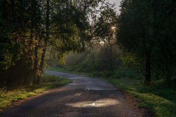 beautiful morning sun light shining through the trees on the road, sun rays