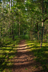 tourist hiking trail track in green summer forest