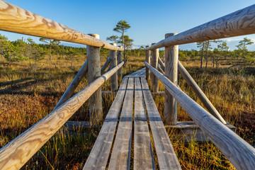 wooden plank boardwalk in swamp area in autumn