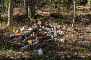 pile of freshly cut log wood in forest