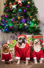Cachorro vestido de papai noel, cão natalino