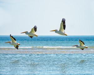 White pelicans flying by sandbar