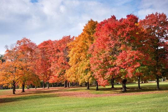 Fall color on University Drive, Winston-Salem.