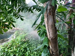 trees in jungle