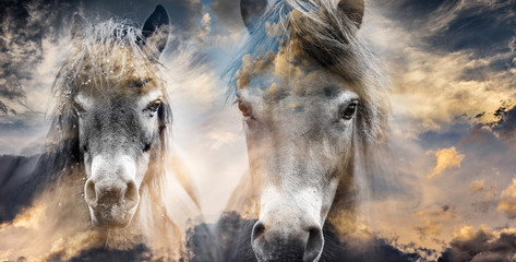two horses - art picture double exposition