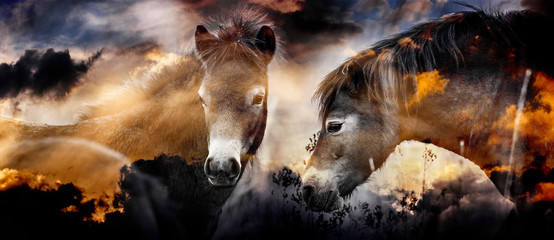 two wild horses - double exposition with sky background