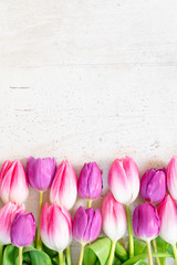 Pink and violet tulip flowers row on gray background, top view with copy space