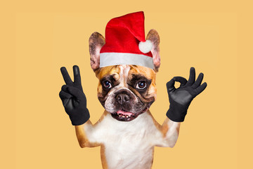french bulldog on white isolated background shows ok and peace in christmas hat