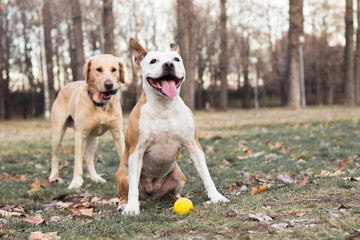Two happy dog friends