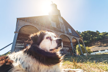 Dog in front of Quinchao Church - Chiloe Island, Chile