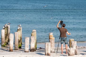 Old Naples, Florida pier pilings in gulf of Mexico with wooden pillars, birds on ocean beach, man photographing with tripod and camera photographing, taking picture, photo